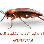 شركة مكافحة حشرات بالخبر